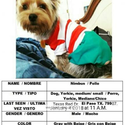 197581 Nimbus Dog Lost And Reunited In El Paso Lost Dog United States